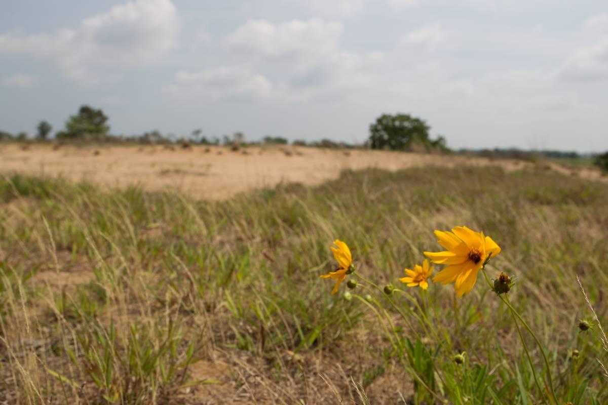 Sand Prairie