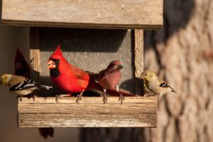 Watching birds visiting your feeders is a great way to practice bird ID.