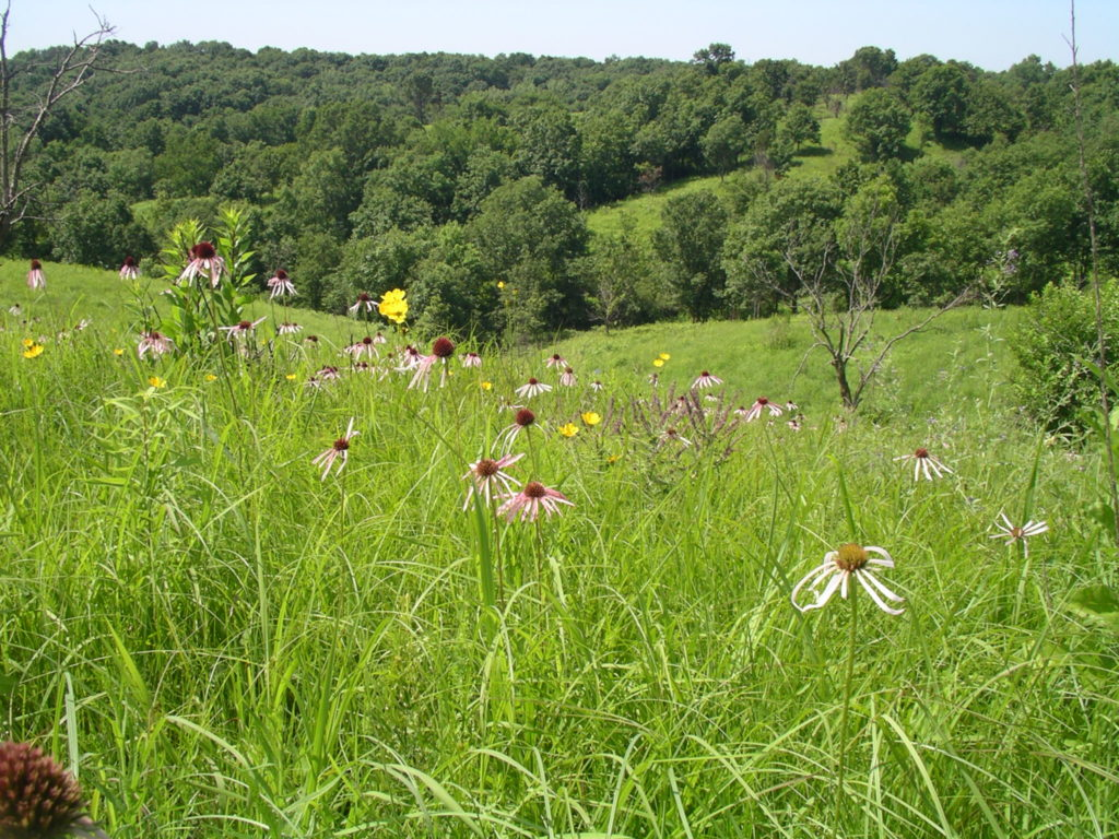 A savanna at Union Ridge