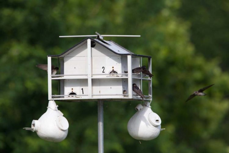 Purple Martin House and Gourds