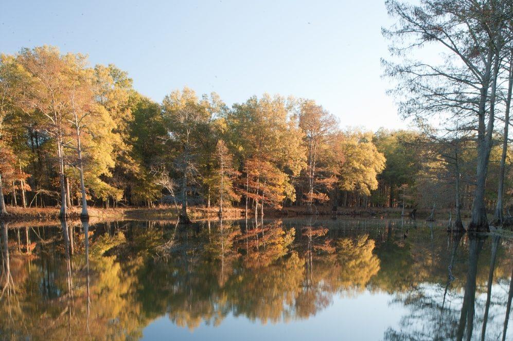 Mississippi lowland streams