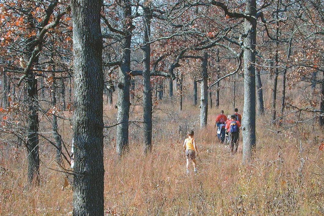 Ozark hardwood woodland has a canopy comprised of various oaks and hickories, and an understory of small trees and shrubs, like American hazelnut and lowbush blueberry.
