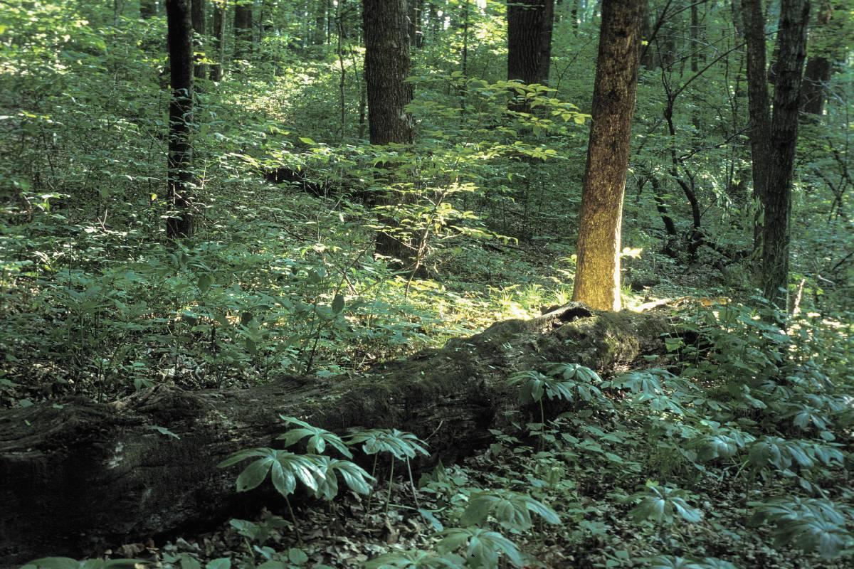 Forest Great Missouri Birding Trail
