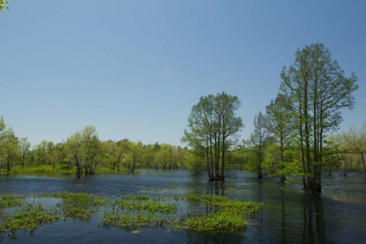 Otter Slough Conservation Area Great Missouri Birding Trail