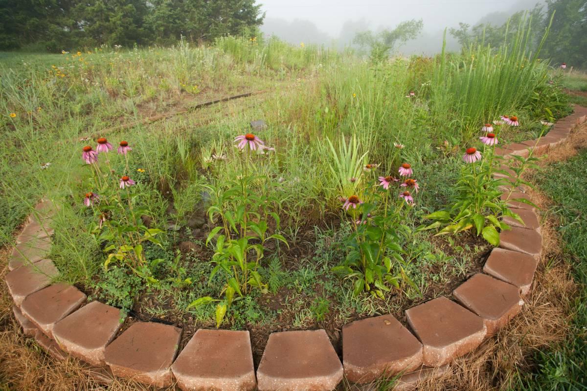 Landscaping for Birds - Great Missouri Birding Trail on Birds Backyard Landscapes id=84580